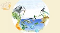 planse si harti pentru cunoasterea mediului