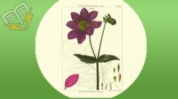 materiale didactice pentru botanica